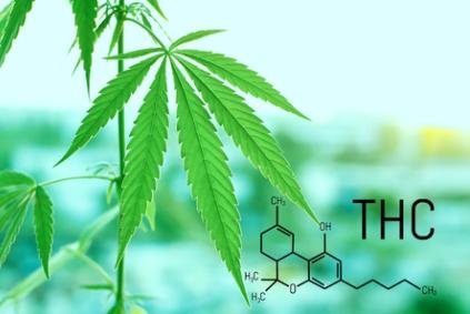 medical cannabis.